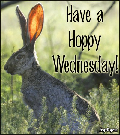 Click to get the codes for this image. Have A Hoppy Wednesday Jack Rabbit Photo, Animals  Bunnies  Rabbits, Happy Wednesday Free Image, Glitter Graphic, Greeting or Meme for Facebook, Twitter or any forum or blog.
