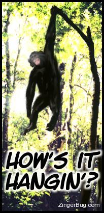 Click to get the codes for this image. Hows It Hangin' Chimp, Funny Stuff  Jokes, Animal, Hi Hello Aloha Wassup etc Free Image, Glitter Graphic, Greeting or Meme for Facebook, Twitter or any forum or blog.
