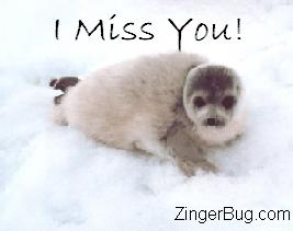 Click to get the codes for this image. I Miss You Seal, I Miss You, Animal Free Image, Glitter Graphic, Greeting or Meme for Facebook, Twitter or any forum or blog.