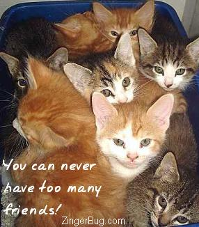 Click to get the codes for this image. This cute photo shows a litter of adorable kittens. The comment reads: You can never have too many friends!