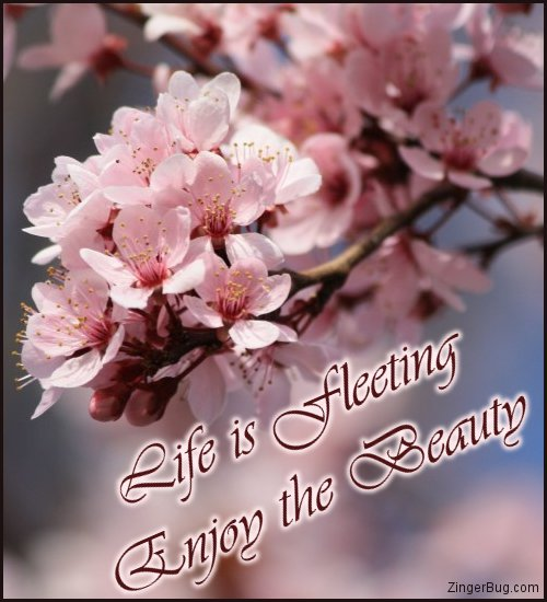 Click to get the codes for this image. Life Is Fleeting Enjoy The Beauty, Faith and Spirituality, Quotes  Sayings Glitter Graphic, Comment, Meme, GIF or Greeting
