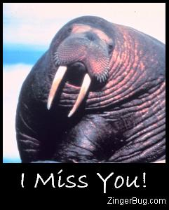 Click to get the codes for this image. Miss You Walrus Photo, Animal, I Miss You Free Image, Glitter Graphic, Greeting or Meme for Facebook, Twitter or any forum or blog.