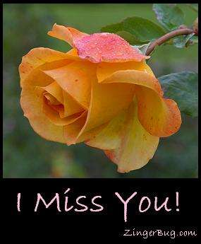 Click to get the codes for this image. Miss You Yellow Rose, I Miss You, Flowers Free Image, Glitter Graphic, Greeting or Meme for Facebook, Twitter or any blog.