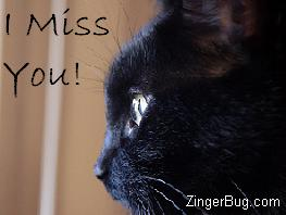 Click to get the codes for this image. Miss you cat, I Miss You, Animals  Cats Free Image, Glitter Graphic, Greeting or Meme for Facebook, Twitter or any forum or blog.