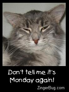 Click to get the codes for this image. Don't Tell Me It's Monday Again Grumpy Cat Photo, Animals  Cats, Happy Monday, Funny Stuff  Jokes Free Image, Glitter Graphic, Greeting or Meme for Facebook, Twitter or any forum or blog.