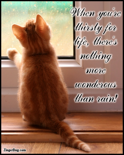 Click to get the codes for this image. Nothing More Wonderous Than Rain Kitten Quote, Animals  Cats, Faith and Spirituality, Quotes  Sayings Glitter Graphic, Comment, Meme, GIF or Greeting