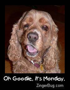 Click to get the codes for this image. Oh Goodie Its Monday Cocker Spaniel Dog Photo, Animals  Dogs, Happy Monday, Funny Stuff  Jokes Free Image, Glitter Graphic, Greeting or Meme for Facebook, Twitter or any forum or blog.