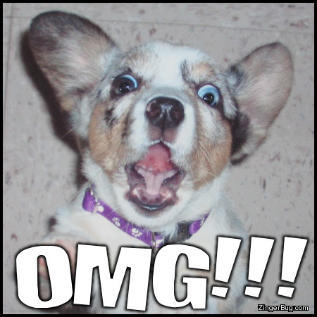 Click to get the codes for this image. Omg Funny Dog, Funny Stuff  Jokes, Animals  Dogs, OMG, Popular Favorites Glitter Graphic, Comment, Meme, GIF or Greeting