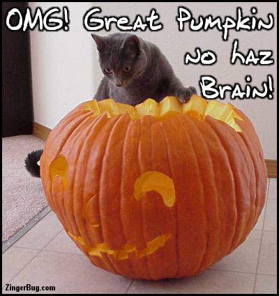 Click to get the codes for this image. Omg Great Pumpkin No Haz Brain Funny Halloween Cat Photo, Animals  Cats, Funny Stuff  Jokes, Halloween Free Image, Glitter Graphic, Greeting or Meme for Facebook, Twitter or any forum or blog.