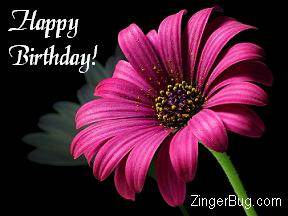 Click to get the codes for this image. Happy Birthday Pink Flower Photo, Birthday Flowers, Flowers, Happy Birthday Free Image, Glitter Graphic, Greeting or Meme for Facebook, Twitter or any forum or blog.