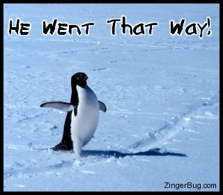 Click to get the codes for this image. Funny photo of a penguit with its wing pointing off to the side. Comment reads: He went that way!