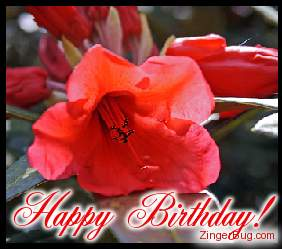 Click to get the codes for this image. Happy Birthday Red Flower Photo, Birthday Flowers, Flowers, Happy Birthday Free Image, Glitter Graphic, Greeting or Meme for Facebook, Twitter or any forum or blog.