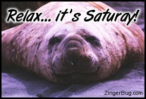 Click to get the codes for this image. Relax Sea Lion Saturday, Animal, Happy Saturday Free Image, Glitter Graphic, Greeting or Meme for Facebook, Twitter or any forum or blog.