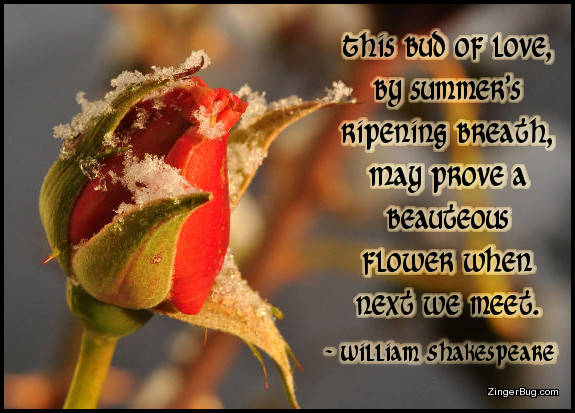 Click to get the codes for this image. This graphic features a photograph of a rosebud covered with snow. The quote is by William Shakespeare and reads: This bud of love, by summer's ripening breath, may prove a beauteous flower when next we meet.