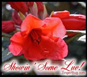 Click to get the codes for this image. Showin Love Red Flower, Showin Some Love, Flowers Free Image, Glitter Graphic, Greeting or Meme for Facebook, Twitter or any blog.