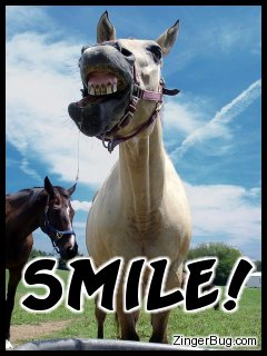 Click to get the codes for this image. This funny photo shows a silly horse bearing its teeth to the camera. The comment reads: Smile!