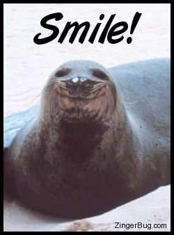 Click to get the codes for this image. Cute photo of a smiling seal. The comment reads: Smile!