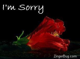 Click to get the codes for this image. Sorry Red Flower, Im Sorry, Flowers Free Image, Glitter Graphic, Greeting or Meme for Facebook, Twitter or any blog.