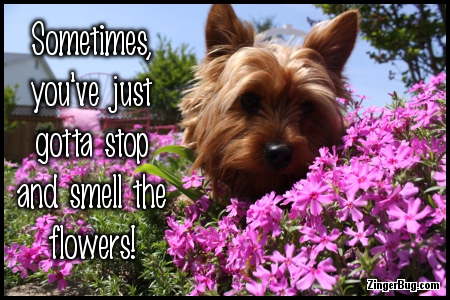 Click to get the codes for this image. Stop And Smell The Flowers Dog Photo, Animals  Dogs, Encouragement  Cheer Up, Quotes  Sayings Glitter Graphic, Comment, Meme, GIF or Greeting
