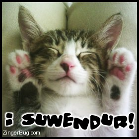 Click to get the codes for this image. This cute photo shows a close up of a kitten lying on it's back with it's front paws up. The comment reads: I suwendur!