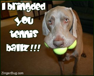 Click to get the codes for this image. This funny photo shows a dog with three tennis balls in its mouth and a very silly look on its face. The comment reads: I bringded you tennis ballz!!!