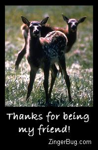 Click to get the codes for this image. Thanks For Being My Friend Fawns, Thanks For The Add, Friendship, Animals  Horses  Hooved Creatures Free Image, Glitter Graphic, Greeting or Meme for Facebook, Twitter or any forum or blog.