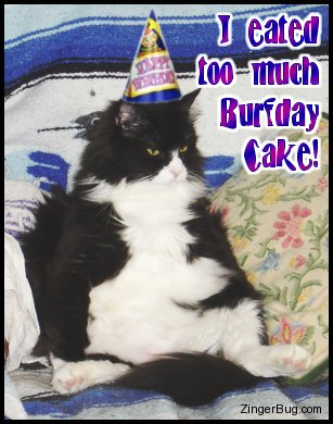 Click to get the codes for this image. I Eated Too Much Burfday Cake Silly Cat, Birthday Animals, Funny Birthday Greetings, Animals  Cats, Happy Birthday, Popular Favorites, Popular Favorites Free Image, Glitter Graphic, Greeting or Meme for Facebook, Twitter or any forum or blog.
