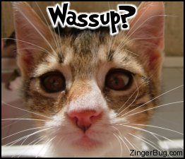 Click to get the codes for this image. This cute photo shows a kitten with its nose right up to the camera. The comment reads: Wassup?