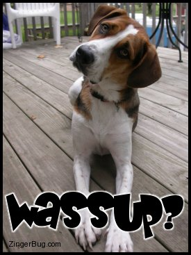 Click to get the codes for this image. This cute photo shows an adorable puppy with its head tilted toward the camera. The comment reads: wassup?