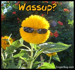Click to get the codes for this image. This funny photo shows a yellow flower wearing sunglasses. The comment reads: Wassup?