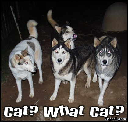 Click to get the codes for this image. What Cat Funny Dog Photo, Funny Stuff  Jokes, Animals  Dogs Free Image, Glitter Graphic, Greeting or Meme for Facebook, Twitter or any forum or blog.