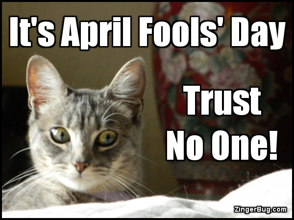 Click to get the codes for this image. April Fools Day Trust No One Lolcat, April Fools Day Glitter Graphic, Comment, Meme, GIF or Greeting