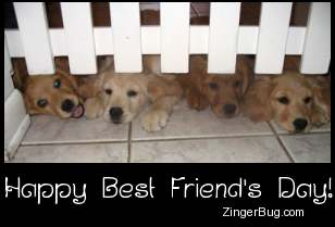 Click to get the codes for this image. Best Friends Day Golden Retriever Puppies, Best Friends Day Free Image, Glitter Graphic, Greeting or Meme for Facebook, Twitter or any forum or blog.