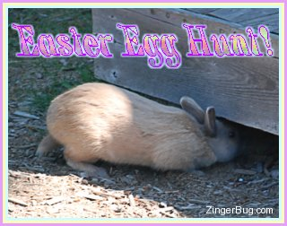 Click to get the codes for this image. Cute photo of a bunny sticking its head under a wooden deck. The comment reads: Easter Egg Hunt!