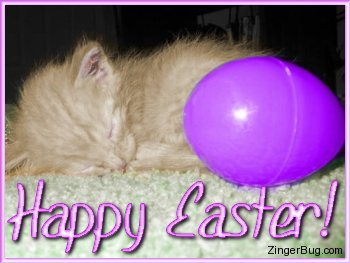 Click to get the codes for this image. This photograph shows a tiny little kitten curled up next to a purple plastic easter egg, that is almost bigger than the kitten. The comment reads: Happy Easter!
