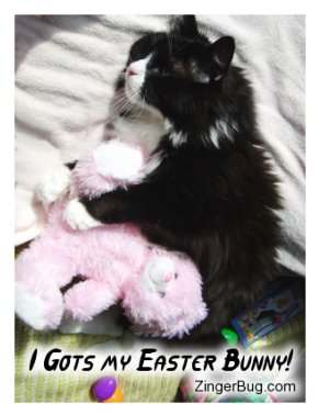 Click to get the codes for this image. Cute photograph of a black and white cat hugging a stuffed Easter bunny. The comment reads: I Gots My Easter Bunny!