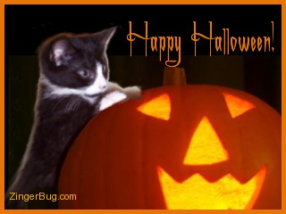 Click to get the codes for this image. Cute photo of a kitten standing up against a jack-o-lantern. The comment reads: Happy Halloween!