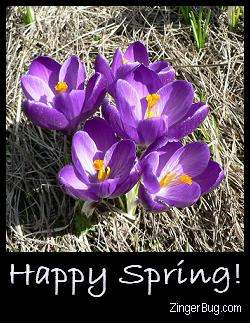 Click to get the codes for this image. Happy Spring Crocus, Spring Free Image, Glitter Graphic, Greeting or Meme for Facebook, Twitter or any forum or blog.