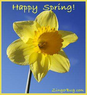 Click to get the codes for this image. Happy Spring Daffodil, Spring Free Image, Glitter Graphic, Greeting or Meme for Facebook, Twitter or any forum or blog.