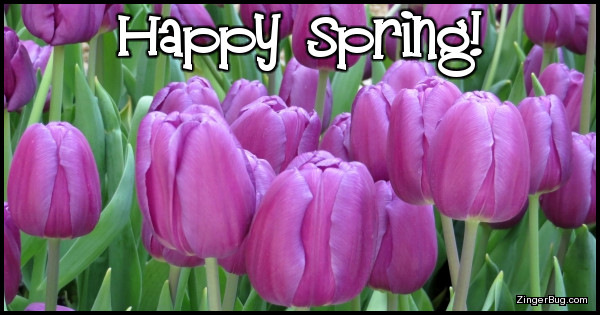 Click to get the codes for this image. Happy Spring Purple Tulips, Spring Free Image, Glitter Graphic, Greeting or Meme for Facebook, Twitter or any forum or blog.