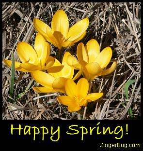 Click to get the codes for this image. Happy Spring Yellow Crocus, Spring Free Image, Glitter Graphic, Greeting or Meme for Facebook, Twitter or any forum or blog.