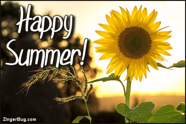 Image result for happy summer with sunflowers