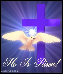 Click to get the codes for this image. Beautiful graphic of a white dove flying in front of a purple cross with an animated starburst behind it. The comment reads: He is Risen!