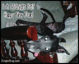 Click to get the codes for this image. Hysterical phtoto of a dog lying on it's back on a sofa with legs going in all directions and its tongue hanging out of its mouth. The comment reads: Is it Midnight Yet? Happy New Year!