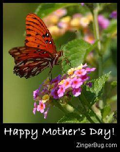 Click to get the codes for this image. Mother's Day Butterfly, Mothers Day Free Image, Glitter Graphic, Greeting or Meme for Facebook, Twitter or any forum or blog.