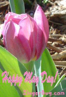 Click to get the codes for this image. Happy May Day Pink Tulip, May Day  Beltane Free Image, Glitter Graphic, Greeting or Meme for Facebook, Twitter or any forum or blog.