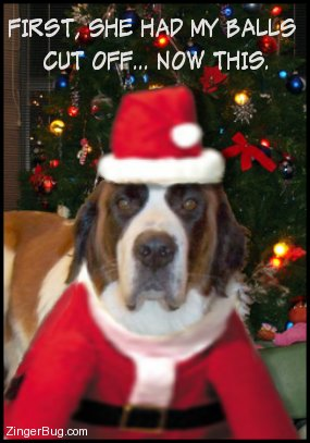 Click to get the codes for this image. This funny photo shows a dog dressed up in a santa suit in front of a Christmas Tree. The comment reads: First, she had my balls cut off... Now this.