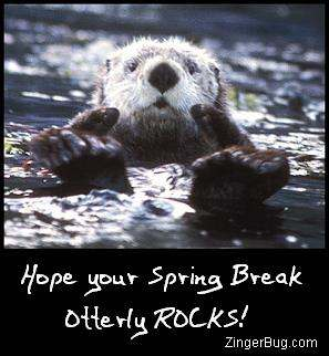 Click to get the codes for this image. Funny photo of a sea otter giving 2 thumbs up. The comment reads: Hope your Spring Break Otterly ROCKS!
