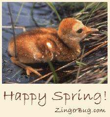 Click to get the codes for this image. Photo of a cute duckling with the comment: Happy Spring!