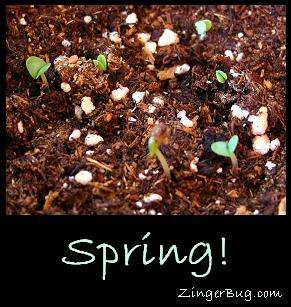 Click to get the codes for this image. This comment shows a photo of spring plants just sprouting out of the ground. The comment reads: Spring!